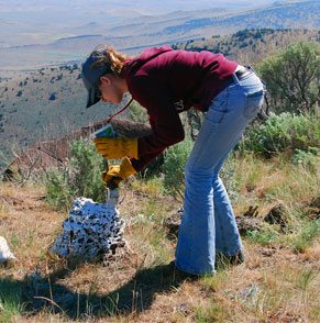 conservation-case-study